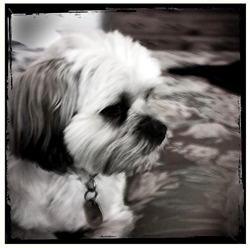 doggy1a