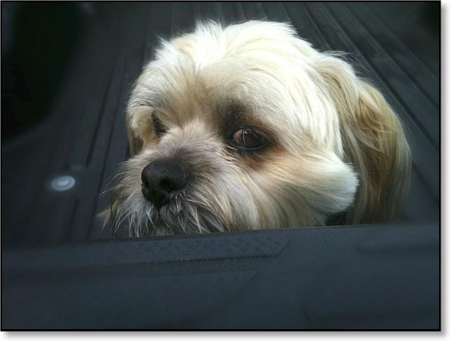 fuzzydog1
